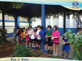 2º ano - Projeto Feijão